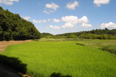 Natsu20100718