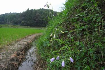 Aki2010092002