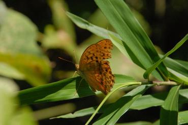 Mesuguro20100925