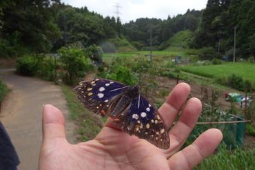 Oomurasaki2011072303