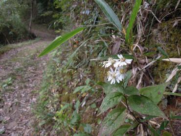Shiroyomena2012102801