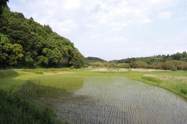 Yatsuda2013052501