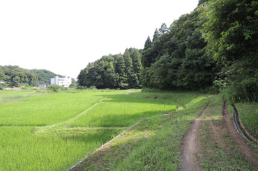 Yatsuda2013062301