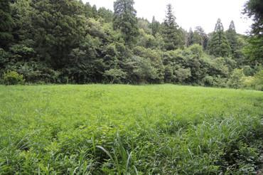 Kusamura2013072001