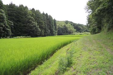 Yatsuda2013072001