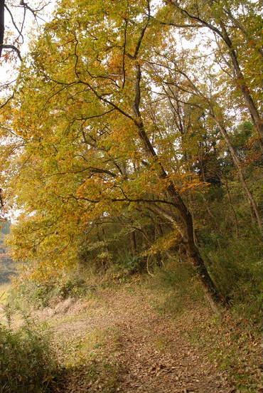 Konara2006112602